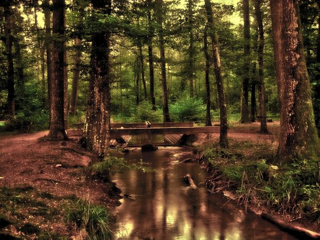 obar75 – Ein ruhiger Bach